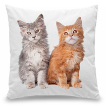 Capa Para Almofada Coleção Love Cats - Maine Coon