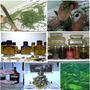 Essência Óleo Natural Perfumado Rechaud Aroma Fragrância 9ml