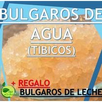 3x1 Bulgaros De Agua Tibicos+ Kefir (leche) Regalo+guia