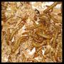 Tenebrios X 100 - Ideal Para Geckos, Pogonas, Erizos Y Aves
