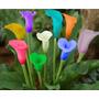 Semillas De Calas Multicolores Flores Jardín Decoración
