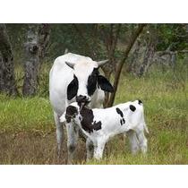 Formula Para Ração De Vacas Leiteira Baixo Custo