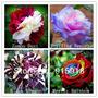 40 Sementes Rosas Exóticas 4 Tipos E Cores- 10 De Cada Cor