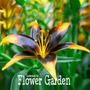 Semilla Lirio Azucena Lilium Flores Raras 10 Semillas