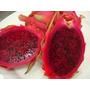 Semente Pitaya Polpa Vermelha 20 Sementes + Brindess