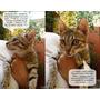 Channel: Cachorra Atigradita Simil Singapur, En Adopcion!