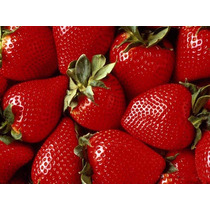 Morango Sensação Para Clima Brasil Sementes Fruta Para Mudas