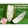 Guanabana O Graviola 30 Unidades Para Medio Mes 100% Pura