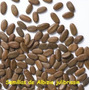 140 Semillas De Seis Arboles Para Bonsai