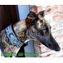 Collar-martingale Para Perros-galgos En Eco-cuero