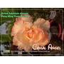 Kit 20 Sementes Rosa Do Deserto Adenium Obesum Mix 20 Cores