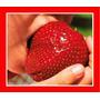 Morango Gigante Sementes Frutas Fruta Para Mudas
