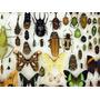 Coleccion De Insectos Disecados