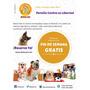 Pensión Canina En Libertad - Hotel Canino - Dog Resort Plus