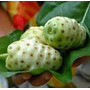 Plantines De Noni Fruta Comestible