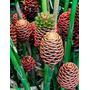 Muda De Sorvete Chocolate - Flores Tropicais
