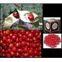 Pau Brasil Ornamental 500 Sementes Artesanato Mais Brinde