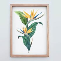 Lámina Ó Cuadro Flor Strelitzia (cuadro Grande 50x66cm)