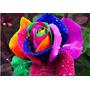Rosas Azul Y Arcoiris Lote 50 Semillas Cada Una Bellísimas
