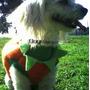 Calabaza Disfraz Halloween Para Perro Talla Cuatro