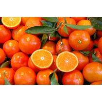65 Semillas De Mandarina