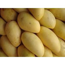 Frutales: Mango Manila Injertado