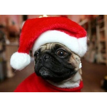 Natal Gorro Papai Noel Cachorro Gato Pet