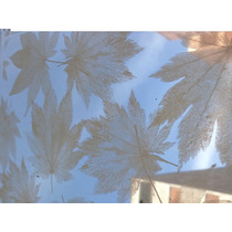 Pelicula Decorativa Para Cristal White Maple Hm4
