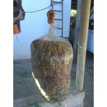 1kg Musgo Sphagnum Esfagno Conhecido Como Chileno Bromélia