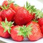 Morango Brasileiro Sensação Sementes Fruta Para Mudas
