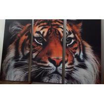 Cuadro Tríptico Tigre