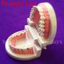 Arcada Dental Para Estudio Y Practica<br><strong class='ch-price reputation-tooltip-price'>$ 25.000</strong>