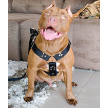 Coleira Cachorro Peitoral Completa Pitbull, Labrador, Boxer