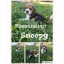 Cachorros Beagle Tricolor Machos