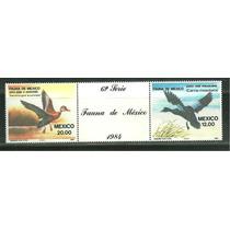 México : Pato Real Mexicano Y Pijije + Etiqueta , Fauna 1984