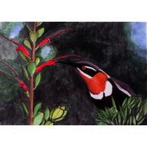 Pintura En Acuarela. Pequeña Ave.
