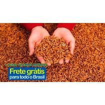 1300 Larvas Tenébrios Molitor - Frete Gratis Alimento Vivo