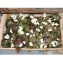 Plantines Flor De Azucar X 28 Unidades Del 10 Bonsaires
