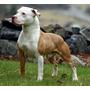 Busco Perro Cachorro Q Sea Grande En Adopción Q Sea Guardian