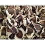 Moringa Oleifera Pack Semillas Mas Guia De Cultivo