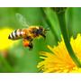 Polen De Flores Y Arboles 2 Kg 100% Natural