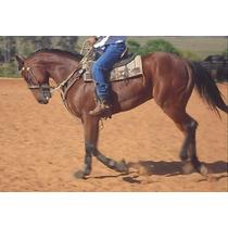 Cavalo Quarto Milha Po Registrado Linhagem Corrida