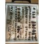 Cuadro De Insectos Africanos Y Americanos, Hermosos !!!