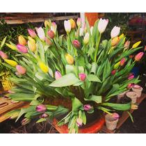 100 Rosas - Tulipanes Holandeses Maxima Calidad En Arreglo