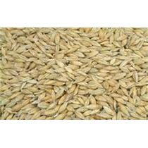 1 Kg Semillas De Hordeum Vulgare - Cebada Organica Sin/t