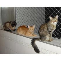 Redes De Proteccion ,blanca , Negra Y Trasnparente, Gatos, P