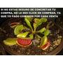 Semillas, Plantas Carnivoras Importadas 10 X 30 Soles,packs