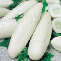 10 Semillas De Pepino Blanco