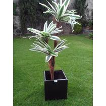 Palma Yuca Artificial