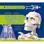 Esqueleto Humano (maquetas Gigantes); Susaeta E Envío Gratis